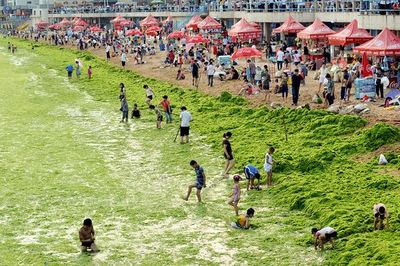 Algal Bloom on China's Coasts