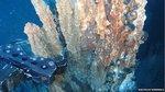 Deep Sea Mining Threatens Ocean Ecosystems